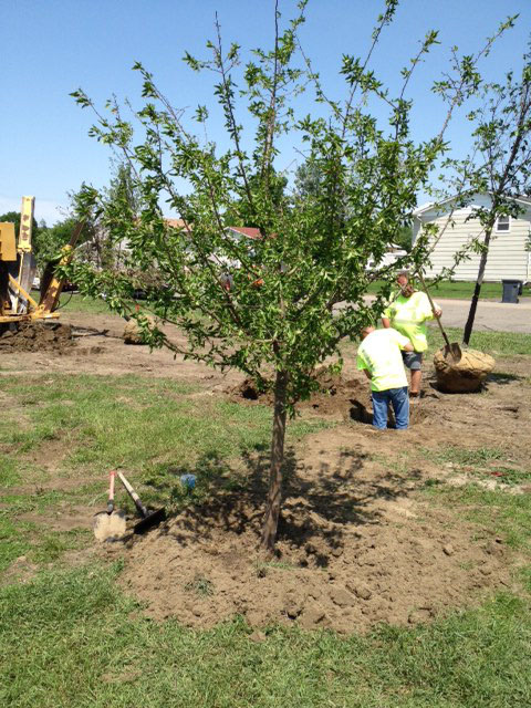 Volunteers Plant Trees at Sports Complex